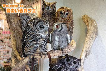 鳥のいるカフェ