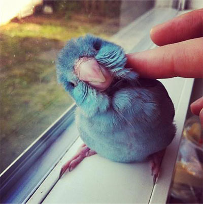 http://www.cutestpaw.com/images/even-if-you-dont-like-birds/
