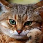 猫にまつわる日本の昔話【動画あり】