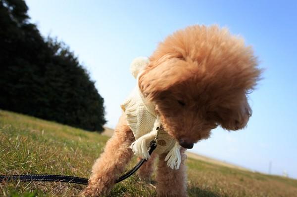 dog-654507_640
