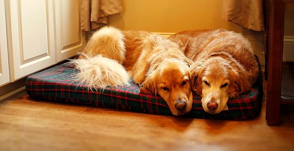 dog_beds
