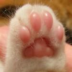 プニプニ♪猫の可愛い肉球画像で癒されよう!!