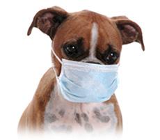 ケネルコフ(犬伝染性気管気管支...