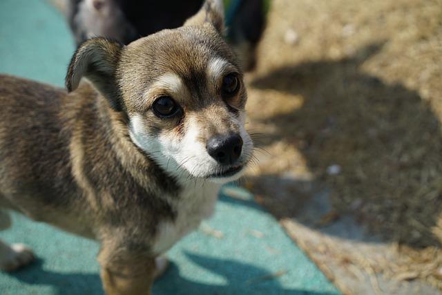 puppy-656211_640