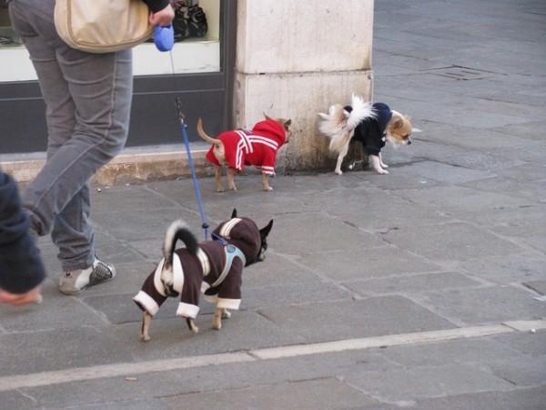 dog-79195_640