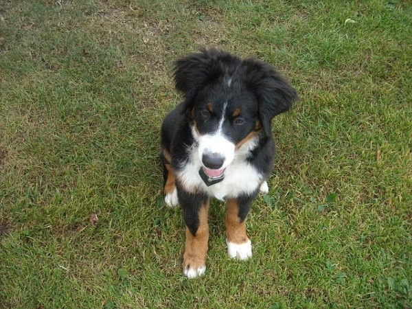 puppy-213951_640-min