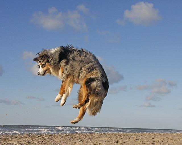 dog-632445_640