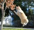 neko-jump
