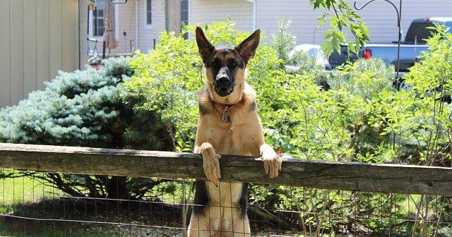 犬が脱走する理由と戻ってくる理由。防止策は?
