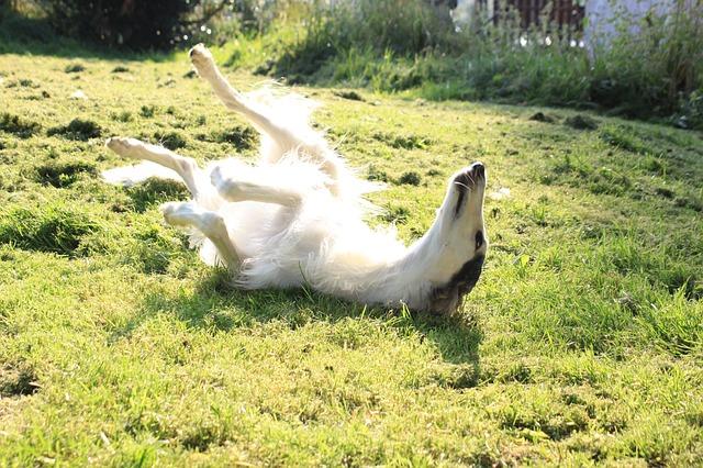 dog-633816_640
