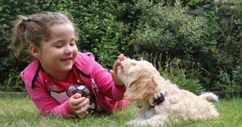 低アレルギーの犬種11選。飼うときの注意点は?