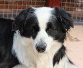犬の毛並みが悪い原因と対策。よくするためにできることは?