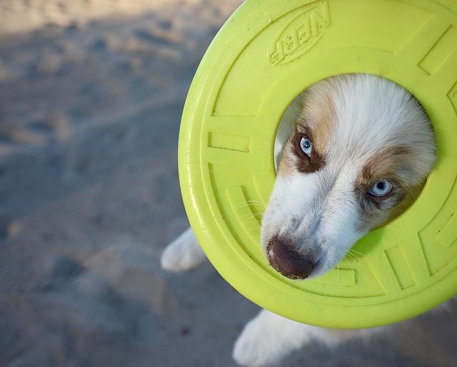 puppy-1391430_640