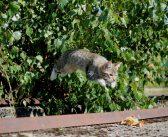 猫の写真集 人気おすすめ10選