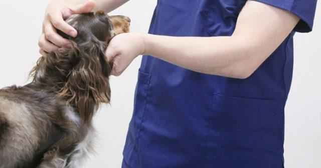 ペットの健康診断で毎年獣医師に聞いておくべきこと4つ