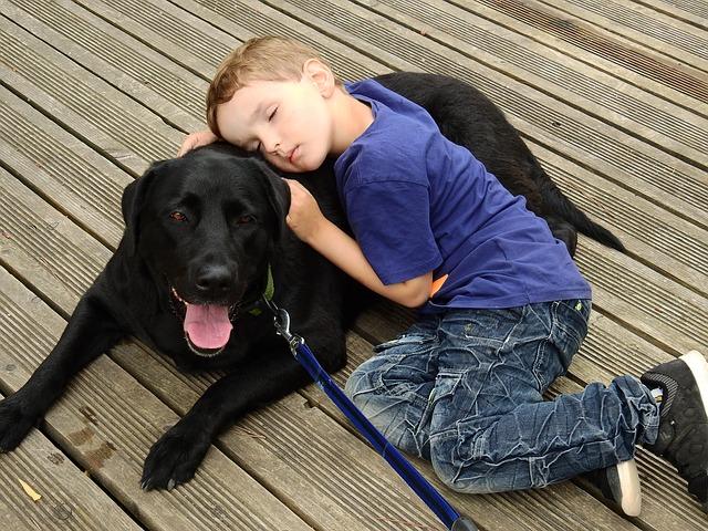 犬が飼い主を信頼している行動 信頼していない行動 サインまとめ