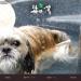 関東地方で犬と楽しめる日帰り温泉4選